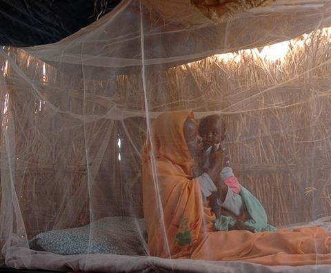 Malaria haikubaliki